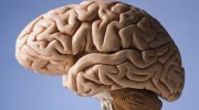 Ретроцеребеллярная киста головного мозга: размеры, симптомы и лечение